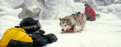 Film-Szenenbild zu Eight Below