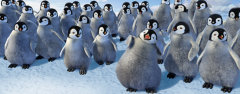 Film-Szenenbild zu Happy Feet