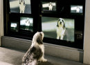 Film-Szenenbild zu The Shaggy Dog