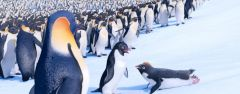 Film-Szenenbild zu Happy Feet 2