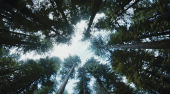 Film-Szenenbild zu The Tree of Life