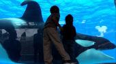 Film-Szenenbild zu Blackfish