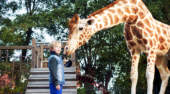 Film-Szenenbild zu My Giraffe